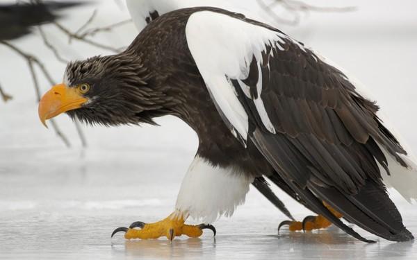 oiseaux pêcheurs des rivières