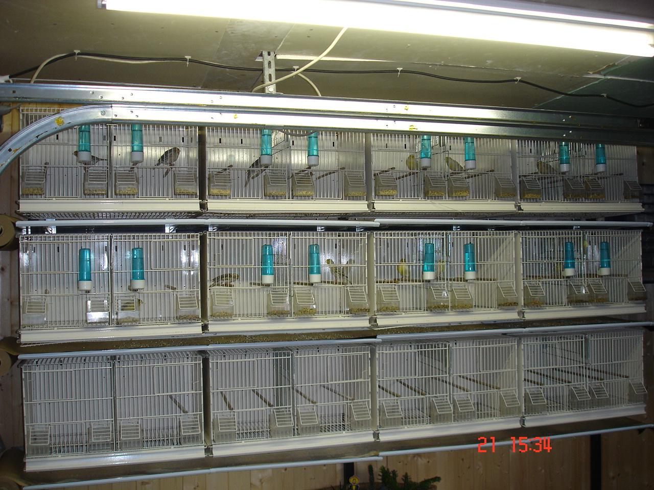 Et encore batterie d 39 levage canaris for Cage a oiseaux decorative pas cher